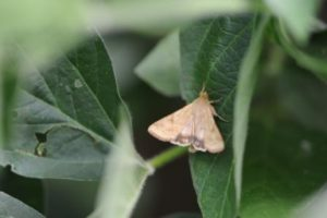brown moth on leaf